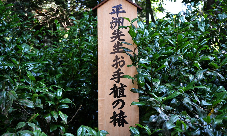 細井平洲先生お手植えの椿2